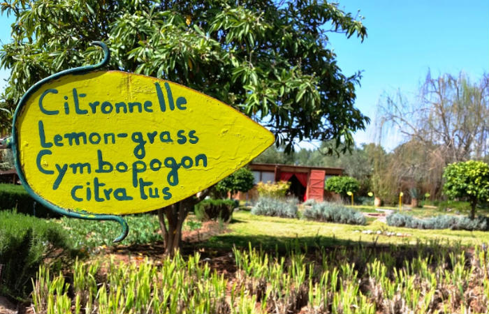 Le Jardin Bio Aromatique de l'Ourika