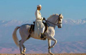 Equestrian Show & sun spotting @ Terre des Etoiles | Marrakech | Marrakech-Safi | Maroc