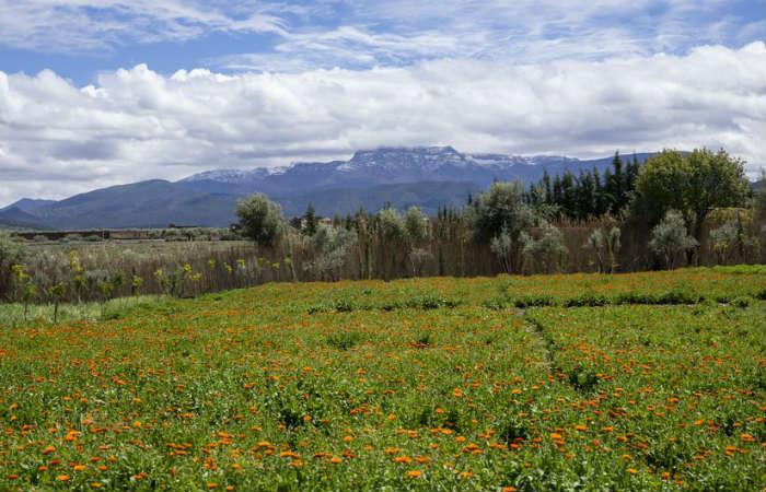 le jardin de l'ourika yves saint laurent