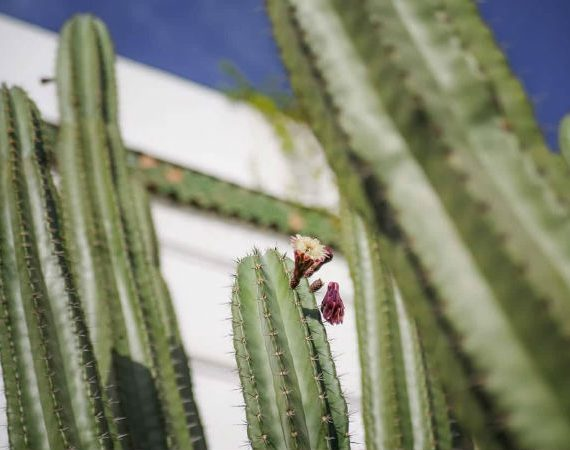 cactus les jardins du lotus