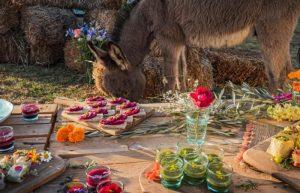 La Ferme Ephémère @ Villa Janna Ecolodge | Marrakesh | Marrakesh-Safi | Maroc